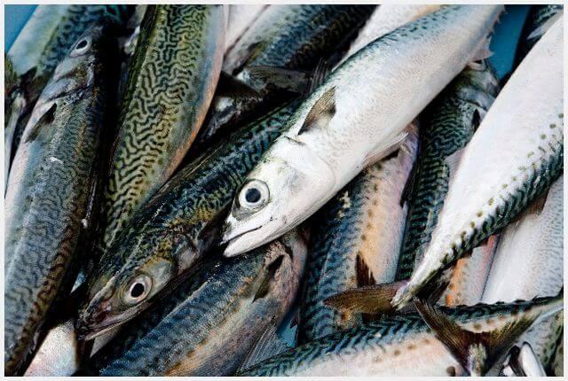 青魚はDHAを多く含む