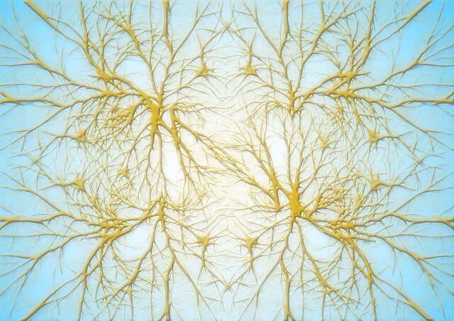 DHAによるシナプス形成促進効果